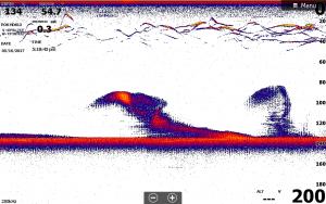 Lake George Fishing Report Sonar Image
