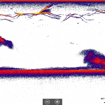 Lake George Fishing Report Sonar Image