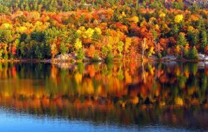 One weekend isn't enough to see all of the foliage this season – stay…