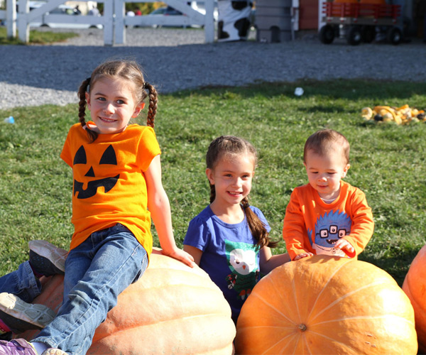 Win free admission, pumpkins and cider donuts at Ellms Family Farm – enter at…