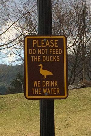 Have you seen this sign? Here's why you shouldn't feed the ducks: