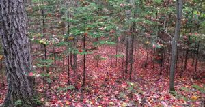Fall is one of the best time to get out for a hike! Check…