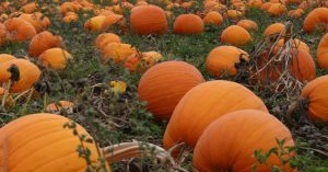 Time to get some pumpkins!